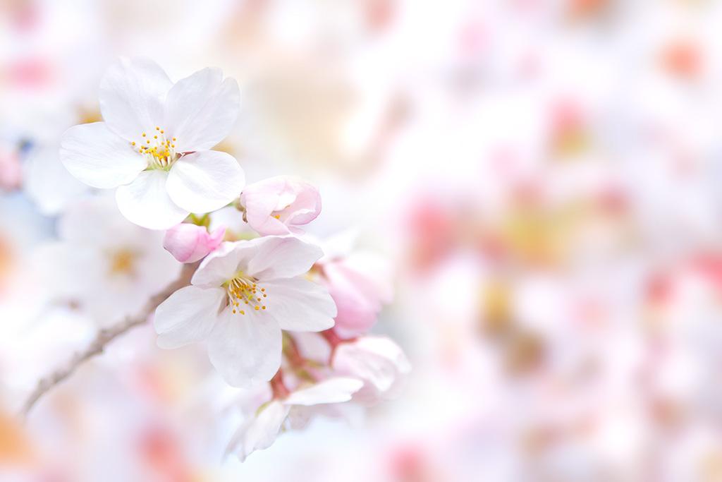 ◇I-LENS/アイレンズ◆2019/4月◆新商品情報◇