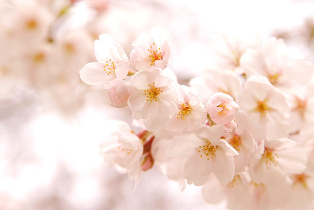 ◇I-LENS/アイレンズ◆2020/3月◆新商品情報◇