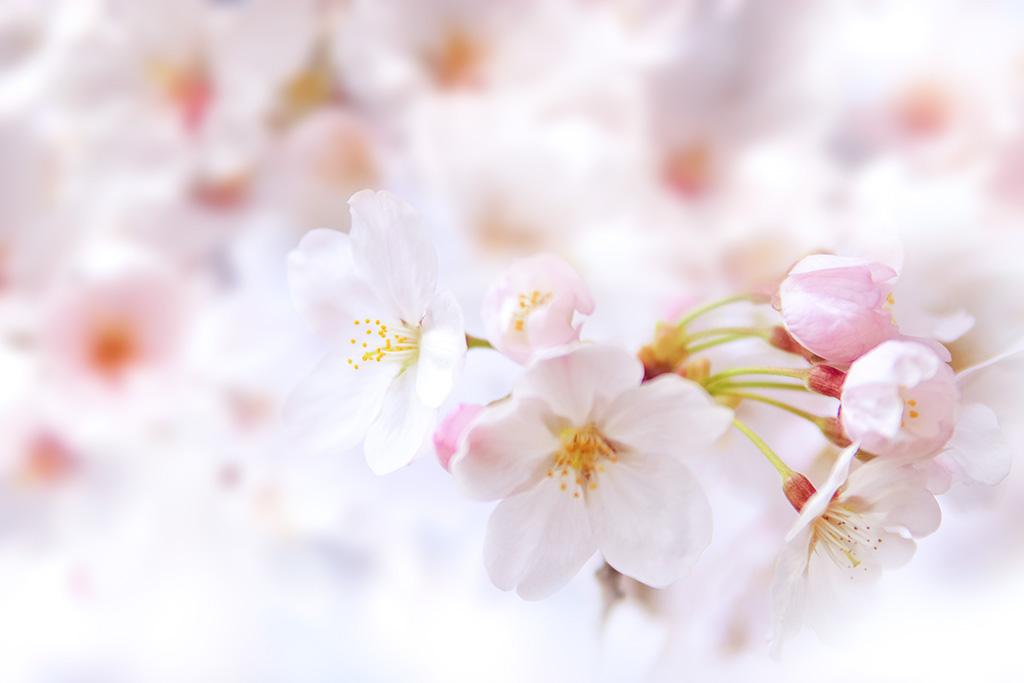 ◇I-LENS/アイレンズ◆2021/3月◆新商品情報◇